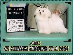 AKC Champion Male.